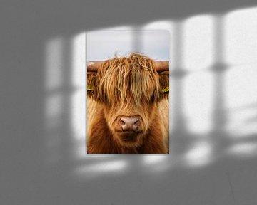 Schotse hooglander 1 van Sandra van Kampen