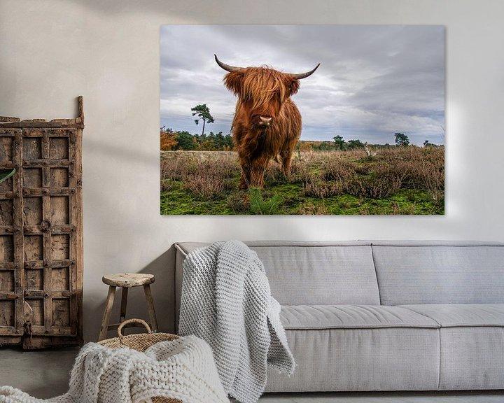 Beispiel: Woeste Schotse Hooglander von Sandra van Kampen