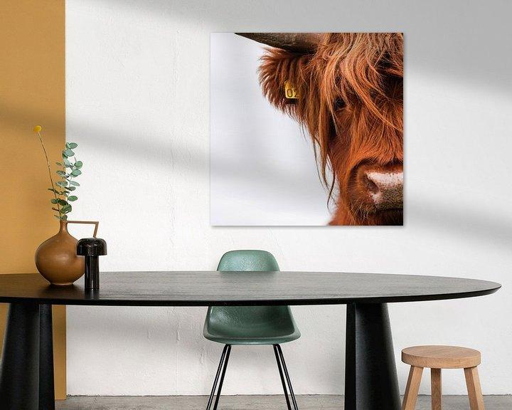 Sfeerimpressie: Portret Schotse Hooglander vierkant van Sandra van Kampen