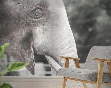 Zoo Antwerpen 3 van Cynthia Jansen