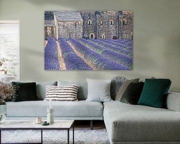 Kloster-Lavendel von Joachim G. Pinkawa