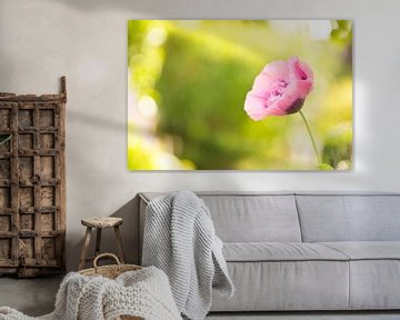 Roze papaver. van Sungi Verhaar