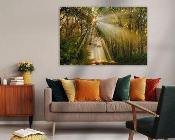 Gouden zonnestralen in herfstbos von Karla Leeftink