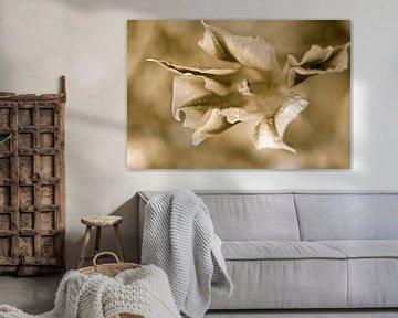 Tulpe und Sepia von Marianna Pobedimova