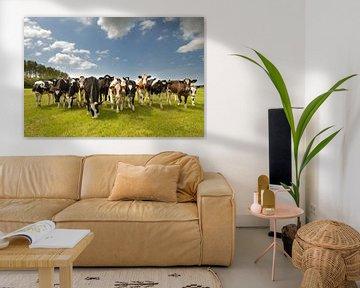 Kühe auf der Weide von Menno Schaefer