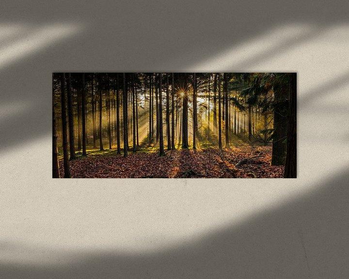 Sfeerimpressie: Herperduinen gouden zon door bos van Henk Verheyen