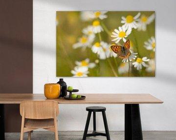 Kleine Vuurvlinder von Albert Eggens