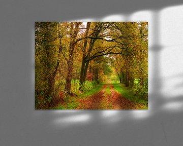 Your Way (Herfstkleuren in het bos) van Caroline Lichthart