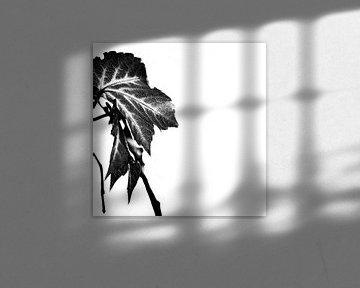 LEAVES MONOCHROM v7 van Pia Schneider