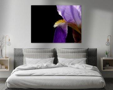 Iris von erik boer
