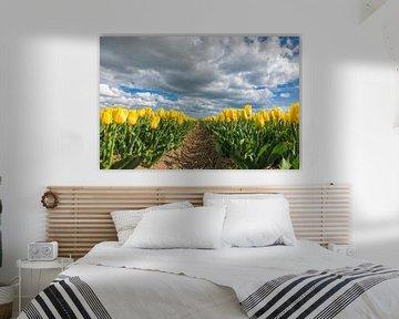 eine gelbe Tulpe Bereich von eric van der eijk