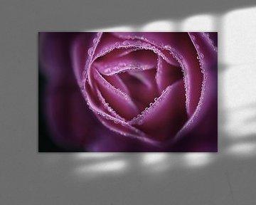 Roos met dauwdruppels van Ruud de Soet