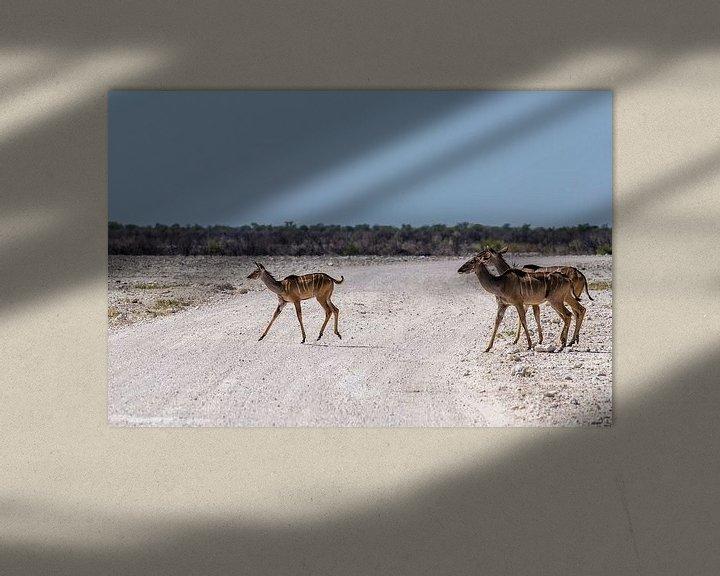 Sfeerimpressie: Overstekende kudu's van Sander RB