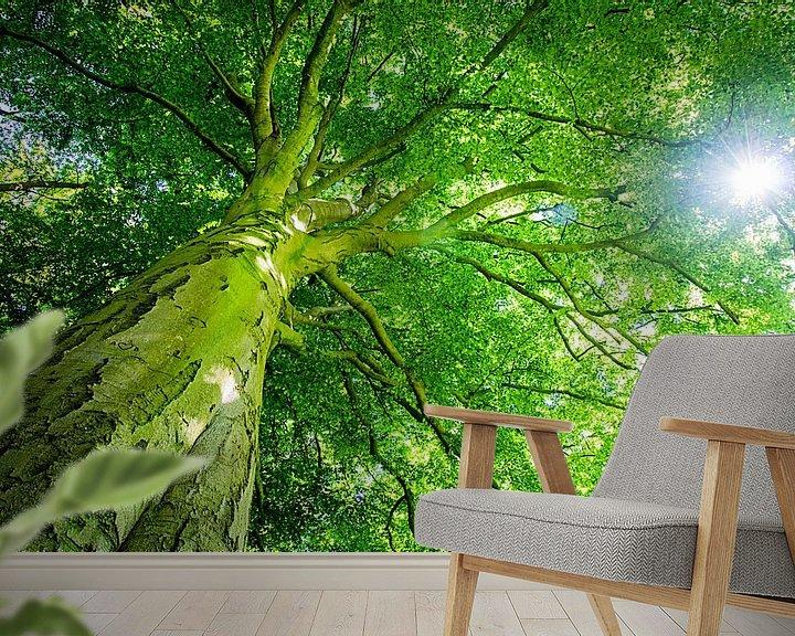 Sfeerimpressie behang: Beukenboom met groot groen bladerdak en doorschijnende zon van Heleen van de Ven