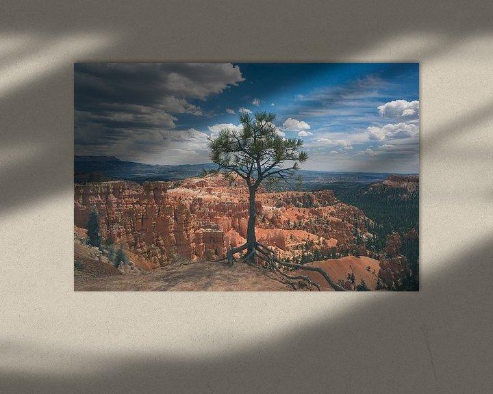 Sfeerimpressie: Eenzame maar sterke boom in Bryce van Jasper van der Meij