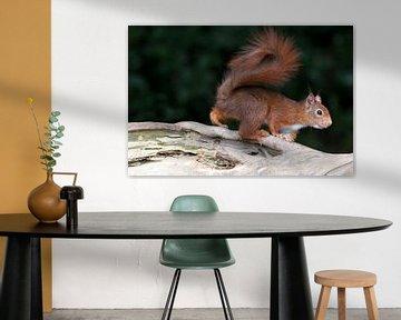 squirrel von emmie van der knokke