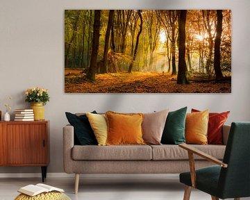 Sunlight in the autumn woods sur Fotografie Egmond