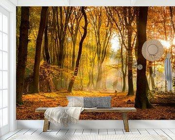 Sonnenlicht im Herbst Wald von Fotografie Egmond