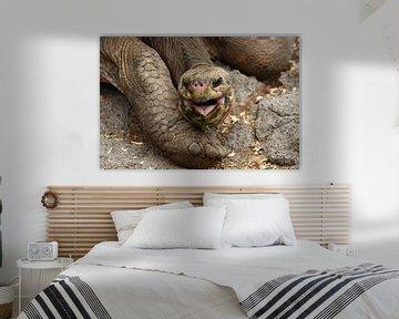 Galápagosreuzenschildpad von Frank Heinen