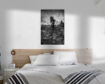 zon achter de boom von Jo Beerens