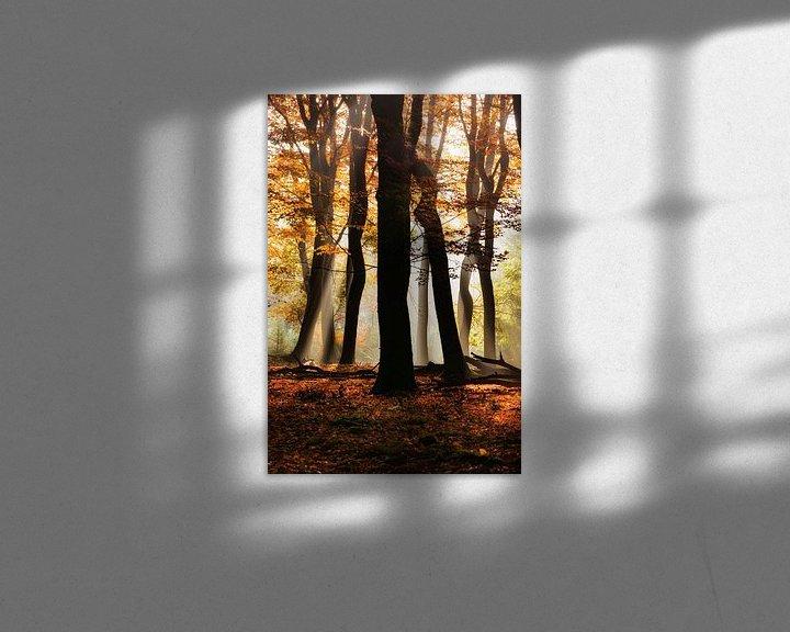 Sfeerimpressie: Het bos van de dansende bomen van Fotografie Egmond