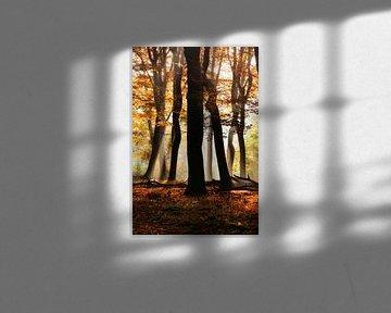 Het bos van de dansende bomen van Fotografie Egmond