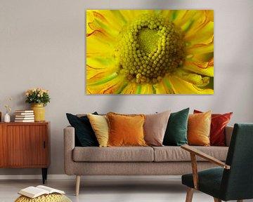 Gele bloem, Macrofotografie