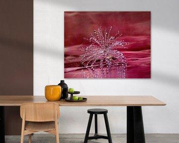 Shine (Paardenbloempluisje met druppeltjes in roze) van Caroline Lichthart