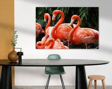 Flamingo's van Dennis van de Water