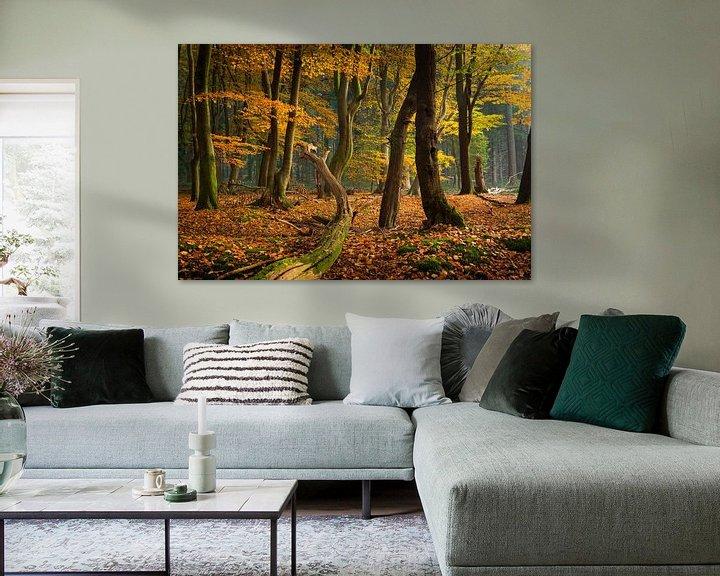 Sfeerimpressie: Het mysterieuze bos van Fotografie Egmond