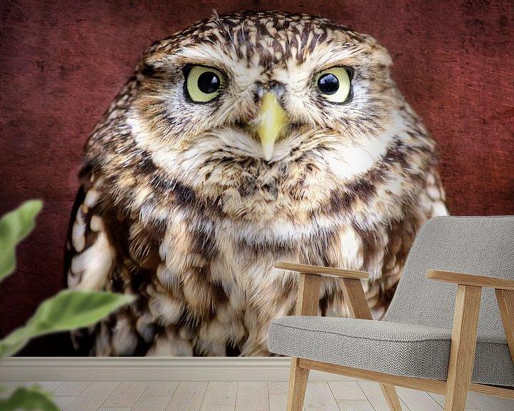 Impression: Little Owl sur Jan Brons