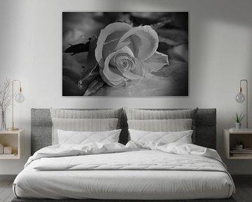 Einsame Rose in schwarz-weiss  von Gera Wijlens