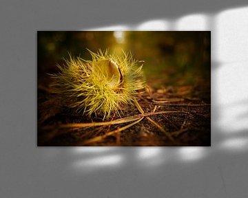 Herfst in het bos von Linda van Miltenburg