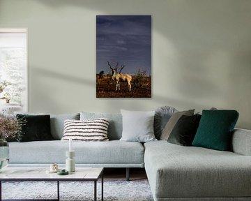 Eenzame kudu in de zon met donkere lucht van Heleen van de Ven