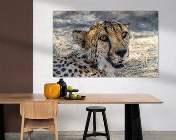 Kop van een Cheetah, Namibië van Rietje Bulthuis