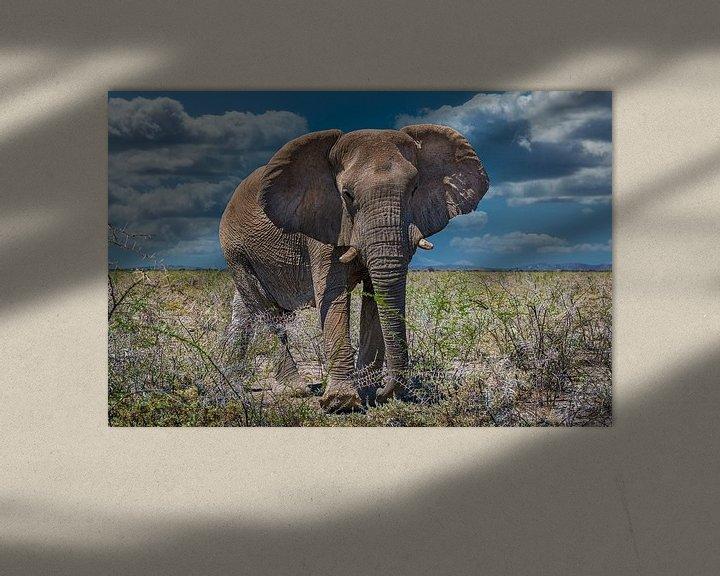 Sfeerimpressie: Ontmoeting met een grote olifant in Etosha, Namibië van Rietje Bulthuis