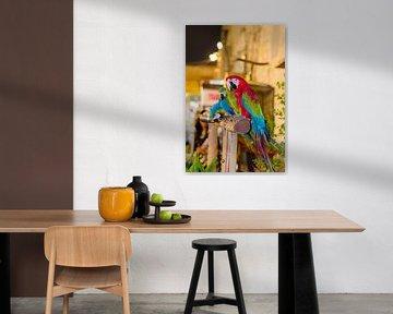 Ara papegaaien in de souk van Doha Qatar von Jack Koning