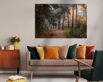 Path Of Trees sur William Mevissen
