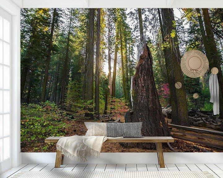 Beispiel fototapete: Yosemite sunrise von Ton Kool