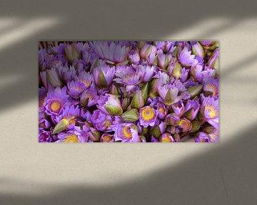Paars lila lotus bloemen  von Gonnie van Hove