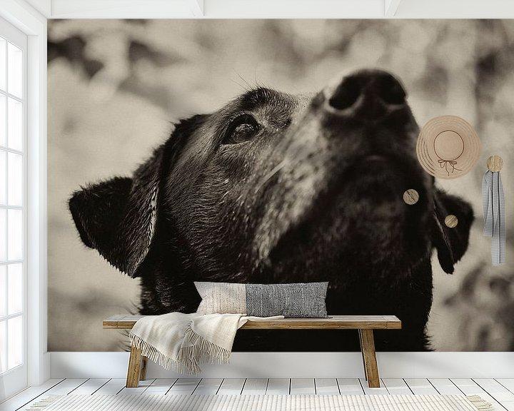 Beispiel fototapete: Concentratie van de hond in zwart wit. Een zwarte labrador von noeky1980 photography