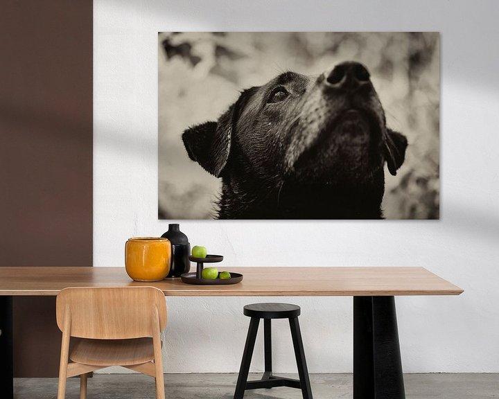 Beispiel: Concentratie van de hond in zwart wit. Een zwarte labrador von noeky1980 photography