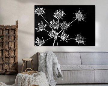 bloemen tak zwartwit van Caroline van Sambeeck