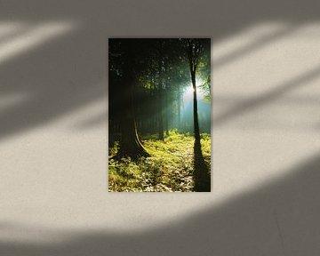 Sonnnenstrahlen im Wald sur Ostsee Bilder