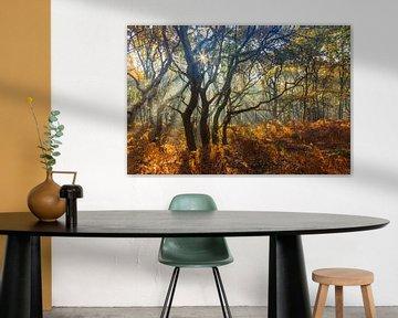 Vier bomen, dansend in de zonnestralen van Karla Leeftink