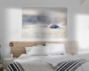 Muschel am Strand von Judith Borremans