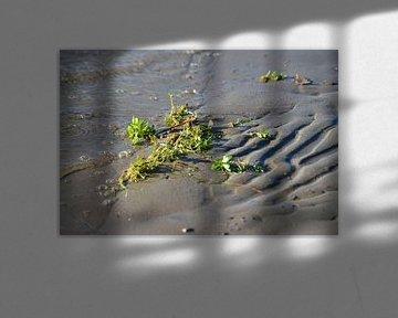 Aangespoelde waterplant van Annemarie Goudswaard