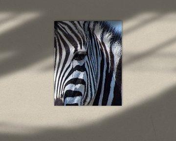 Zebrakop, detail van Rietje Bulthuis