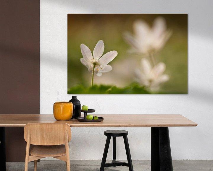 Sfeerimpressie: Bloeiende bosanemoon van Caroline Piek