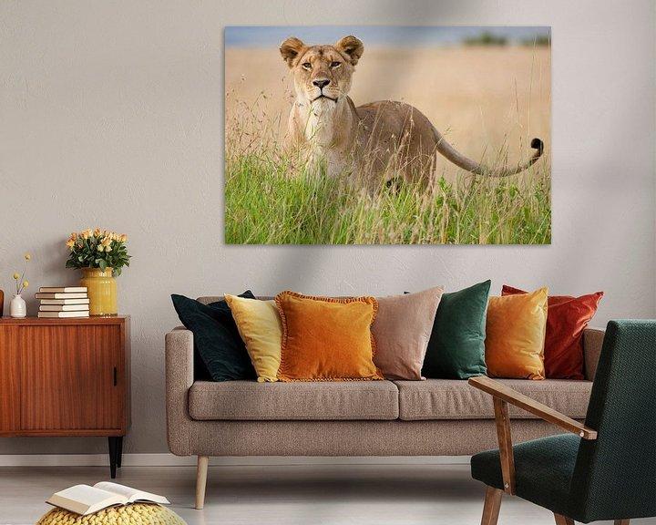 Sfeerimpressie: Leeuw staat in hoog gras van Caroline Piek